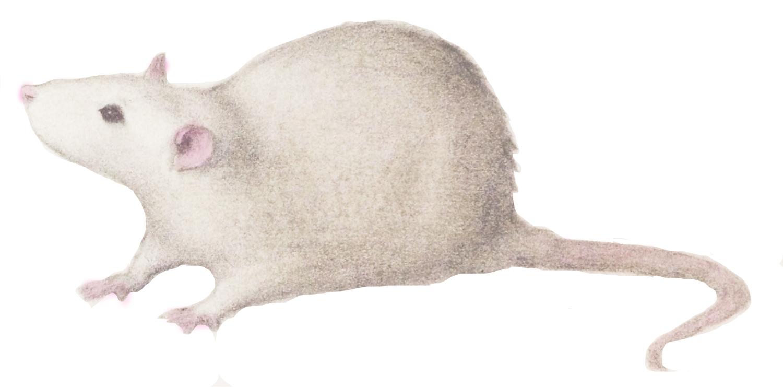 Krister Eide Rat