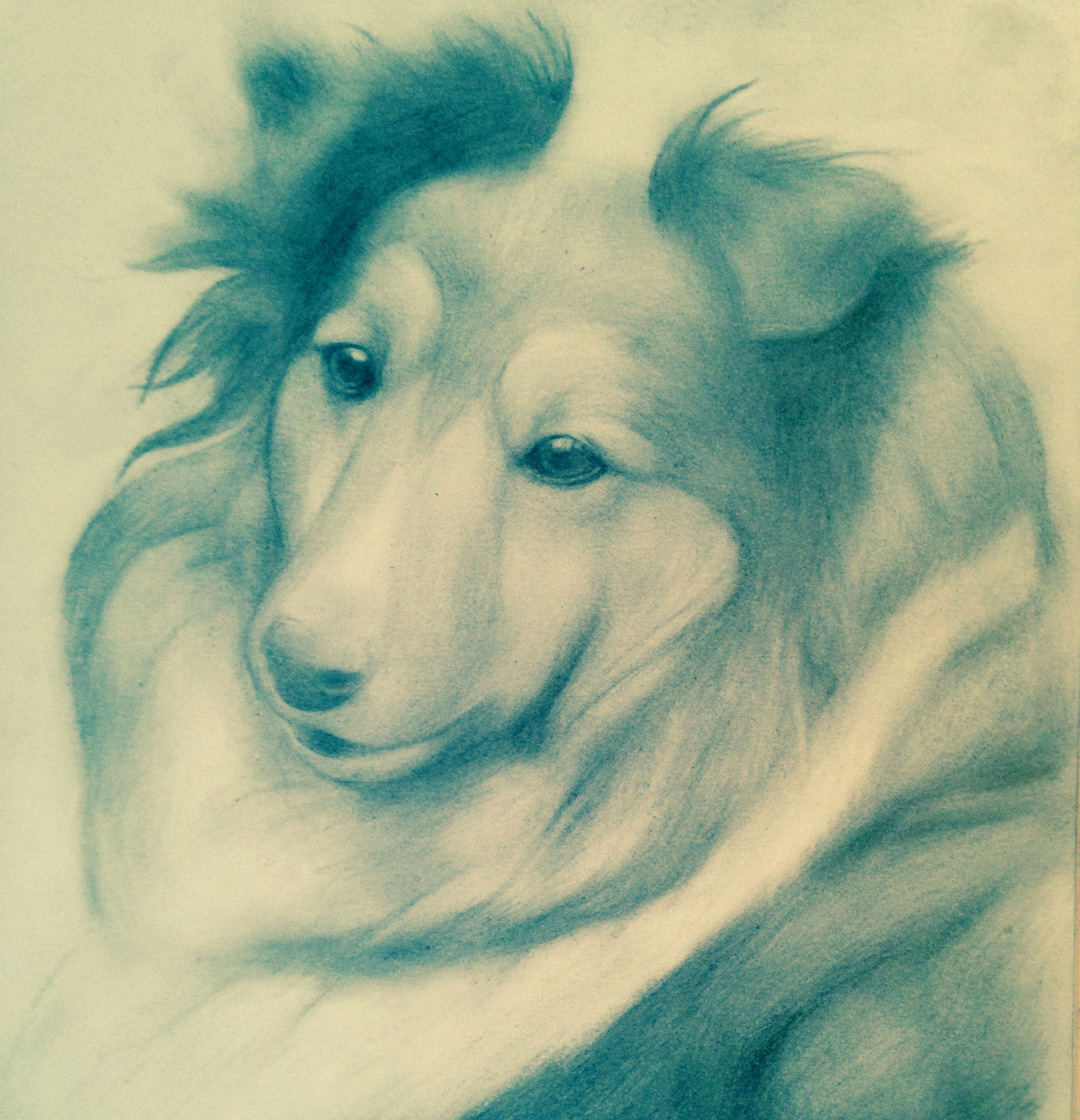 Back to Basics – Pencil, a Collie, and Portrait Class