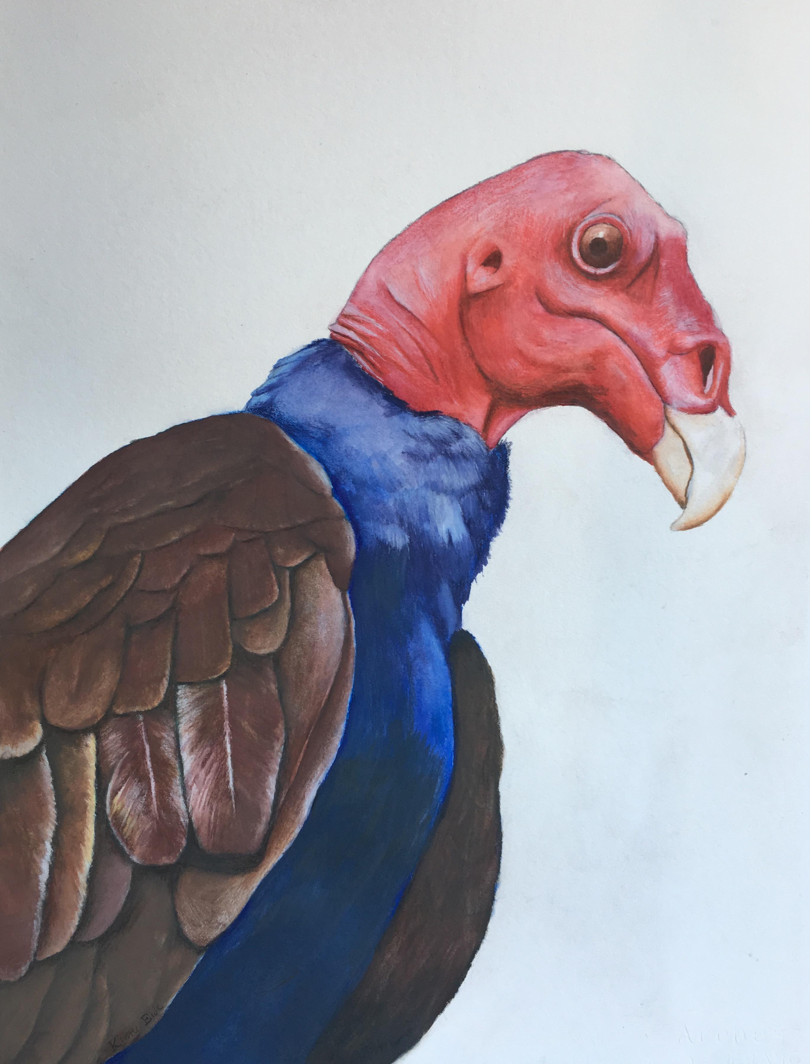 Turkey-Vulture-Watercolor-Krister-Eide
