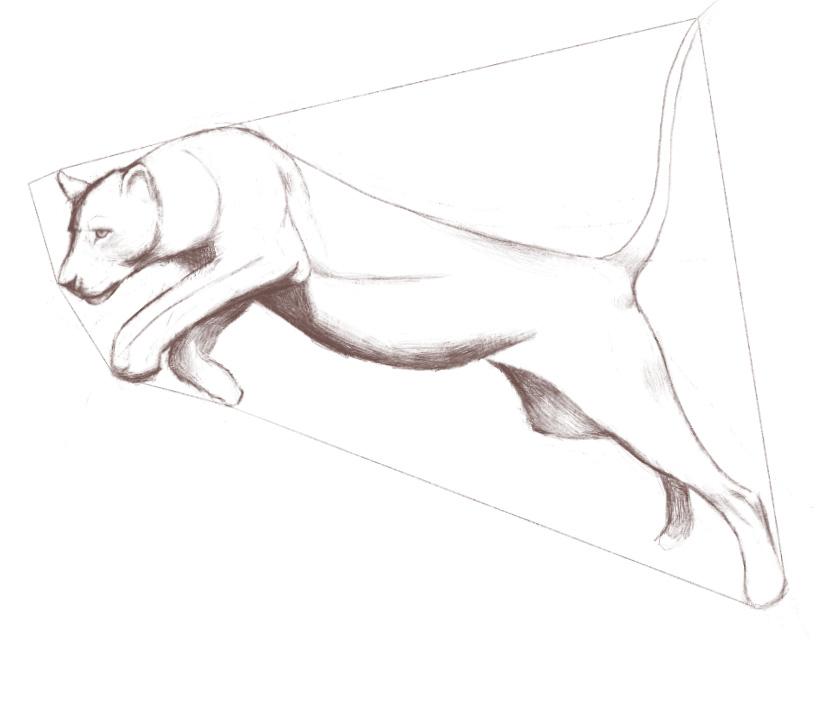 Big Cats – Animal Anatomy and Drawing