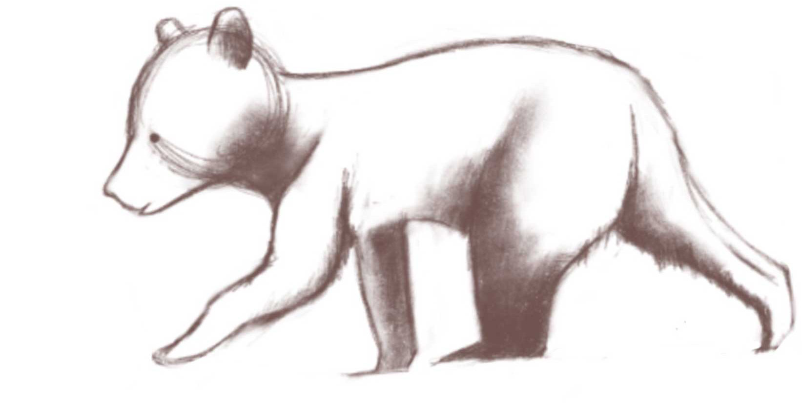 Sketching Bears, Wolves, and Dogs